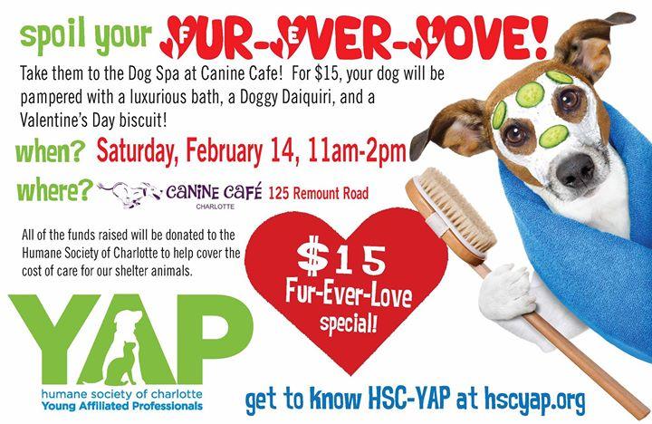 Valentine's Charity Dog Wash, Charlotte NC