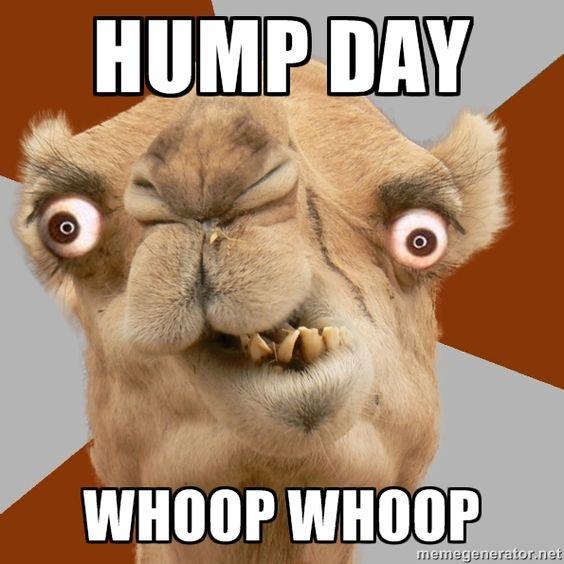 Half Price Hump Day! Cha Cha and Samba