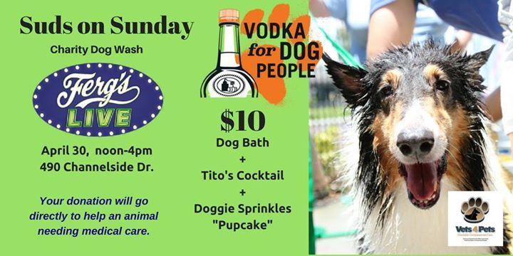 Suds on Sunday Charity Dog Wash