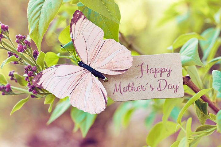 Mother's Day at Butterfly Wonderland