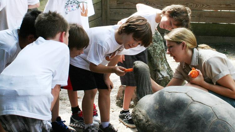 Summer Camp Adventures   Central Florida Zoo