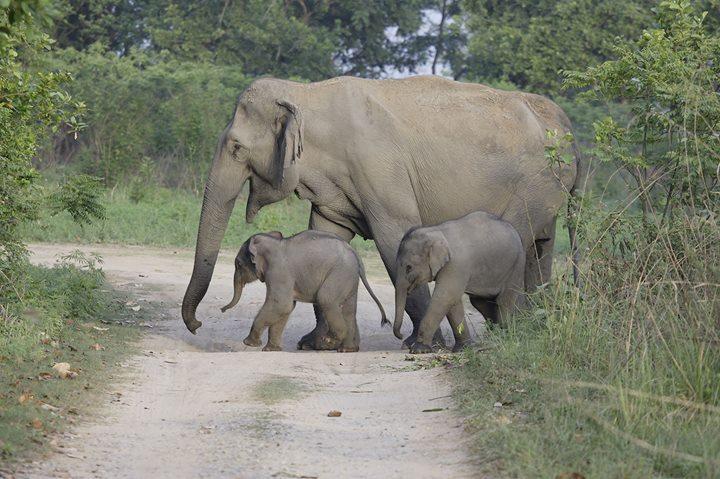 3rd Annual World Elephant Day Celebration