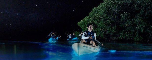 Bioluminescence Kayaking April 1st - Dec 31 Use Promo Code 0228