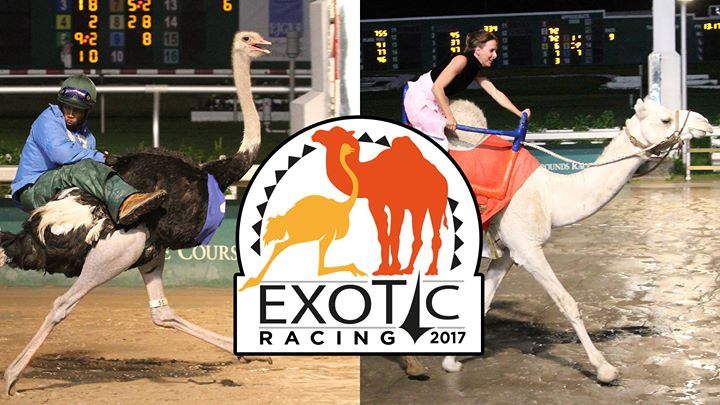 Fair Grounds Exotic Racing