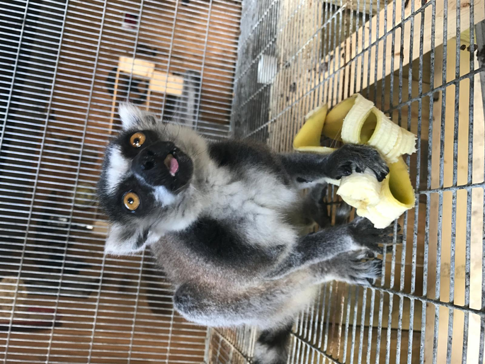 Exotic Animal Auction, Tampa FL - Sep 23, 2017 - 11:00 AM