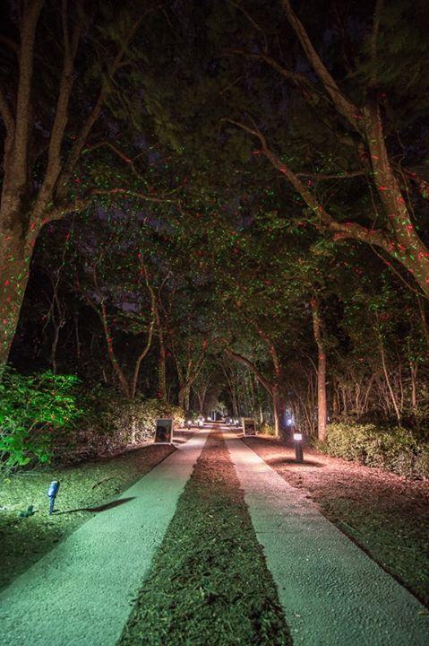 """Festival of Trees"" Evening Stroll"