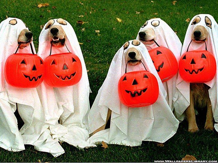 Trick or Treat Halloween Pet Parade & Costume Contest