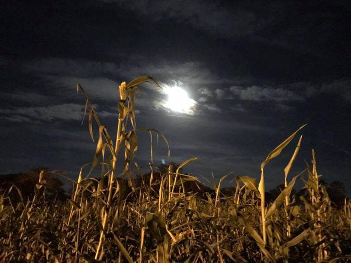 Friday Flashlight Night on the Farm