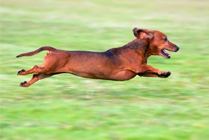 The 1st Annual Wiener Dog Dash & Canine Costume Contest
