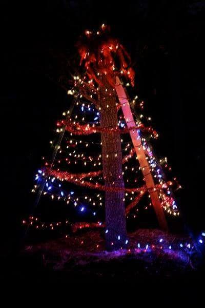 Venice Holiday Tree Lighting