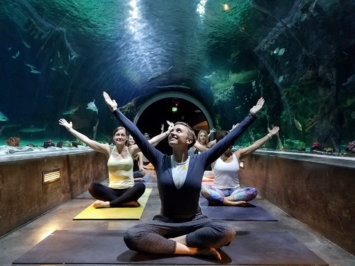 Yoga with the Sharks! at The Living Planet Aquarium, Salt ...