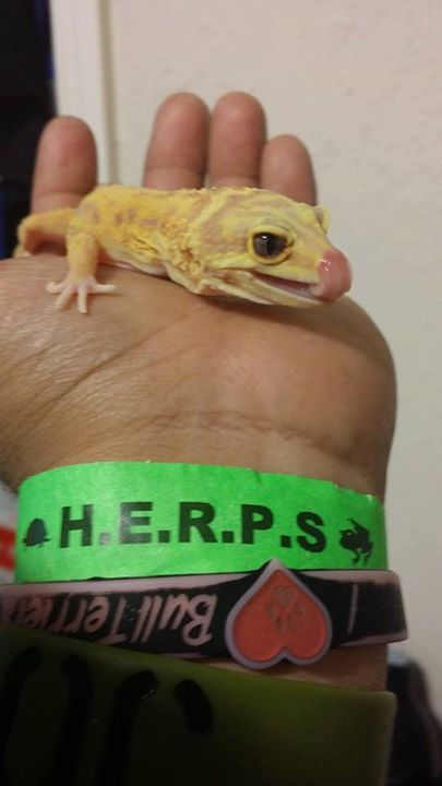 HERPS East Texas Reptile and Exotic Pet Show - Longview