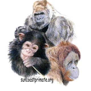 Mother's Day at Suncoast Primate Sanctuary!