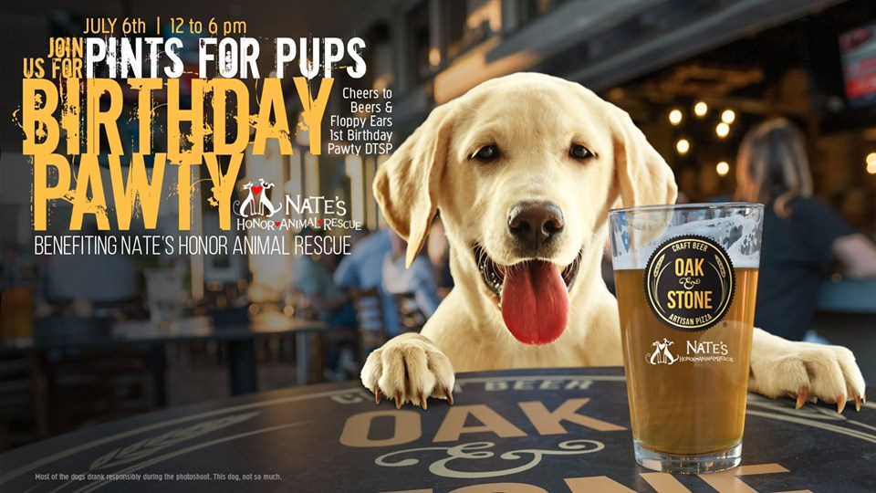 8cbba28061 Pints for Pups: Birthday Paw-ty, St Petersburg & Clearwater FL - Jul ...