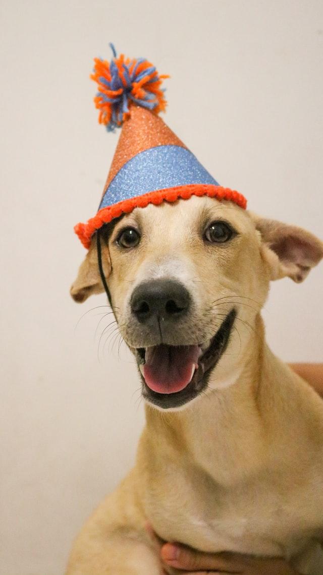 Howl-O-Ween Pawty & Pet Adoption!