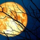 Sunday, October 13th Haunted Hunters Moon Tour