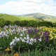 Mother's Day at Nola's Iris Garden