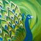 Majestic Peacock in Seminole Heights 7/27