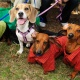 Celebrate Operation Kindness' 40th Anniversary at Dog Day Afternoon