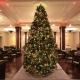 7th Annual Christmas Tree Lighting