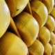 "Annual ""Parmigiano Reggiano Crack"" Event 