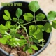 Moringa Management 2