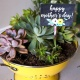 Mother's Day Garden Class with Mimosa