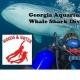 Whale Shark Dive: GA Aquarium