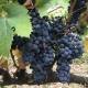 Bellina Alimentari's I Love Vino