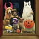 Doggy Trick or Treat