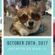 Fall 2017 So Cal Corgi Beach Day