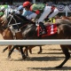 Live Thoroughbred Racing at Tampa Bay Downs