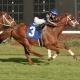 Stakes Saturday at Tampa Bay Downs