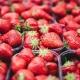 Florida Strawberry Festival 2021