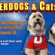 Operation Kindness Hosting Underdogs (and Cats) Matchmaking Event