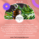 Aromatherapy 1 Class – Tuesday October 5th 6-8:30pm
