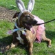 Doggie Egg Hunt and Costume Contest