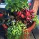 Kids Club Gardening Series: Make a Planter for Mom