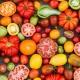 The Grainger County Tomato Festival