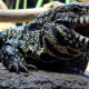 HERPS Hill Country Exotic Reptile Expo