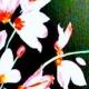 Paint Wine Denver Pink Orchids Sat June 23rd 3pm $35