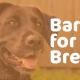 Bark for Brews