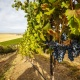 Celebrate Walla Walla Valley Wine - The World of Merlot