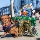 4th Annual Longboat Key Hot Diggity Dog Parade and Contest