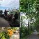 Native & Invasive Plant Hike in the Niagara Gorge