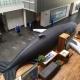 Humpback Whale Sanctuary Day