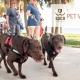 SPCA Tampa Bay Pet Walk