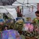 26th Annual Downtown Dunedin Craft Festival