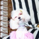 6th Annual Canines & Couture