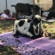 Labor Day Weekend Goat Yoga for Families, Sunday 9/2